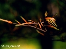 fot-marek-pindral-57_0